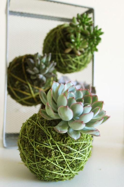 Kokedama de succulentes, vu sur http://thewgnews.com